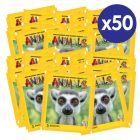 Animals 2020 Sticker Collection - Bundle of 50 packets
